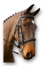 Brass Buckle Weymouth Headset with Square Raised Padded  Noseband